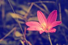 Little Pink Flower  Spring ,nature ,summer Background