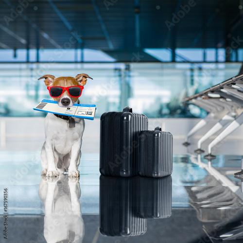 Photo sur Aluminium Chien de Crazy dog in airport terminal on vacation