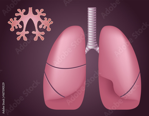 Human Lungs Alveoli Medical Science Vector Anatomy Buy This