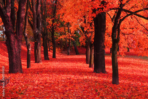 Spoed Foto op Canvas Koraal red autumn park