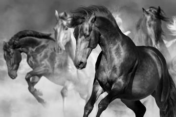 Panel Szklany Do salonu Horse portrait in herd in motion in desert dust. Balck and white