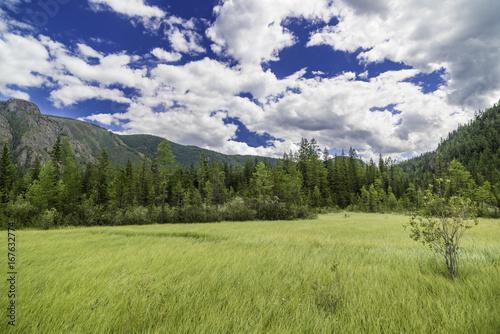 Foto op Canvas Pistache Summer mountain landscape of Altai