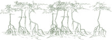Sketch Of Mangrove Forests