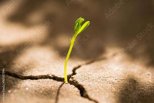Photo Business concept of growth: sprout growing out of concrete