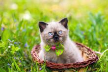 Little Kitten Wearing Bow Tie ...