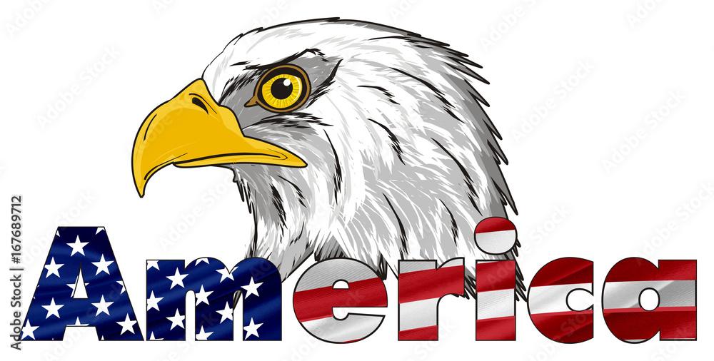 Eagle, bird, bald eagle, head, beak, white, America, United States of America, cartoon, illustration, american, symbol, animal, feather, hunter, July 4, flag, letters