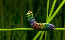 Rainbow Caterpillar 3D Model M...