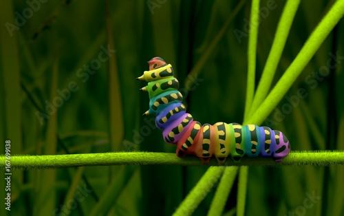 Fotomural  Rainbow Caterpillar 3D model macro