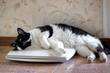 The Cat On The Scales, Thick, Fluffy, Partially In The Balance, Humor.