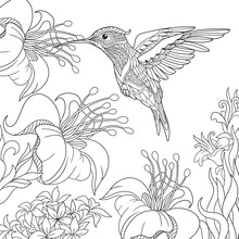 Coloring Page Of Hummingbird A...