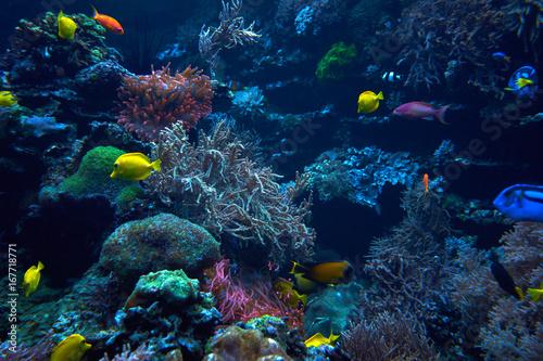 Foto op Plexiglas Koraalriffen underwater background. Underwater scene. Underwater world. Underwater life landscape