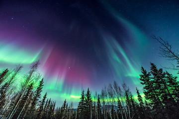 Purpurowa i zielona zorza polarna / zorza polarna nad linią drzew