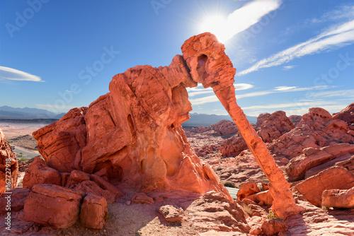 Fotografie, Obraz Elephant Rock in Valley of Fire near Overton, Nevada, U.S.A.