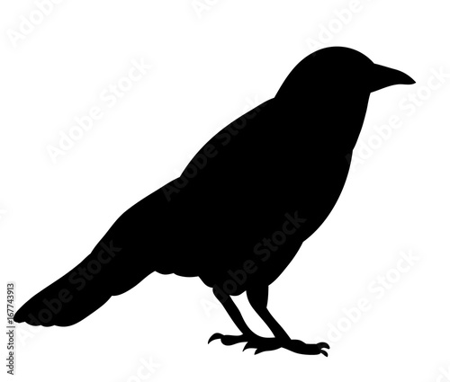 Vector, isolated black silhouette bird, crow Fototapeta