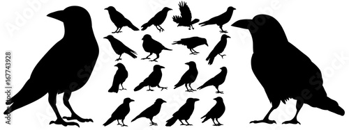 Canvas Print Vector, isolated black silhouette bird, crow collection