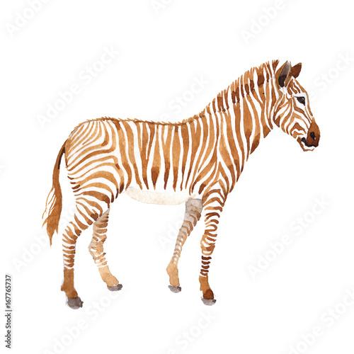 egzotyczne-zebry-dzikie-zwierze-w-akwareli