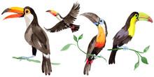 Sky Bird Toucan In A Wildlife ...