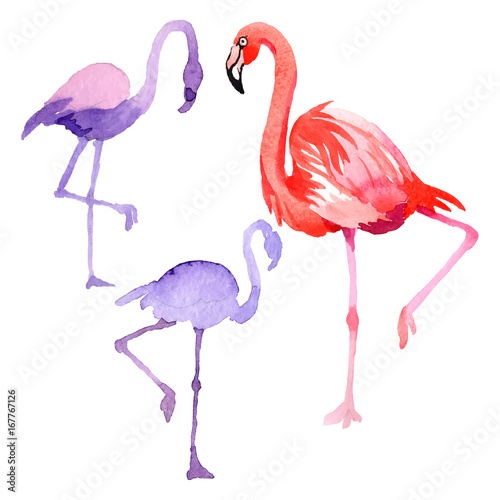 Canvas Prints Flamingo Bird Sky bird flamingo in a wildlife by vectorr style isolated. Wild freedom, bird with a flying wings. Aquarelle bird for background, texture, pattern, frame, border or tattoo.