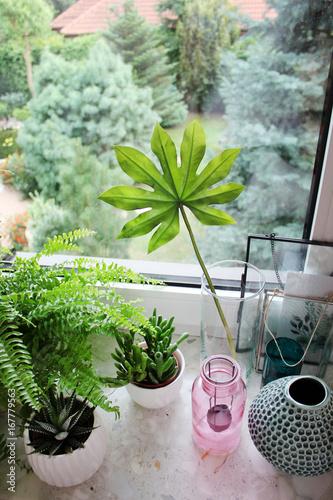 widok z okna, rośliny na parapecie - 167779563