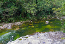 Green Water Of The Mossman Riv...