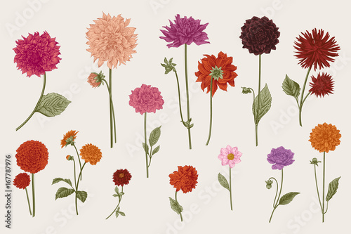 Canvas-taulu Dahlias set