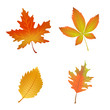 Autumn Leaves. Set of vector illustrations isolated on white background