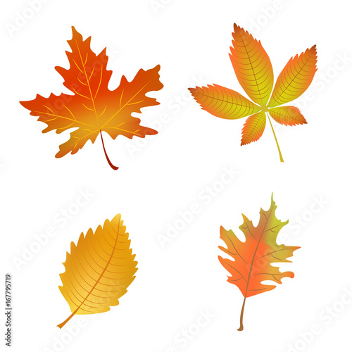 Fototapety, obrazy: Autumn Leaves. Set of vector illustrations isolated on white background