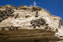 Cliff Swallow Nests Of Yellowstone