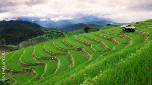 Tuinposter Rijstvelden Green terrace rice field in Chiangmai , Thailand