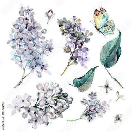 akwarela-kolekcja-fioletowy-bzu