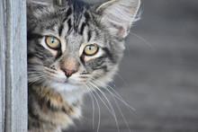 Closeup Of Cat