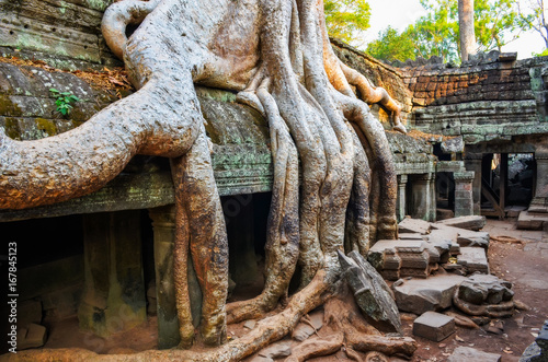 Poster Ruine Detail of old tree roots and ancient temple ruins at Angkor Wat