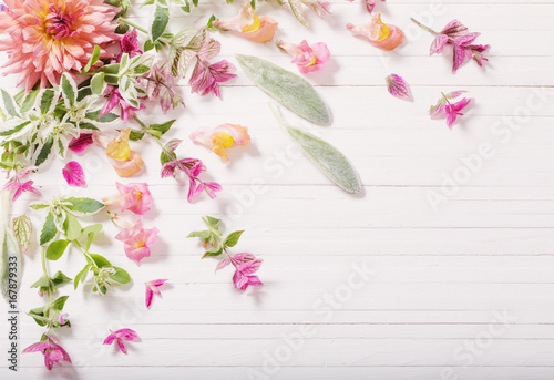Poster de jardin Dahlia beautiful flowers on white wooden background