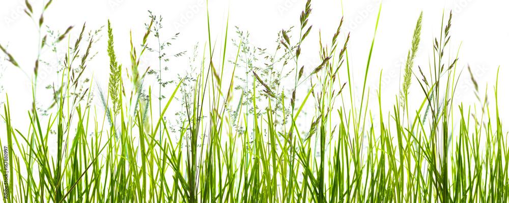Fototapety, obrazy: gräser, grashalme, wiese vor weißem hintergrund