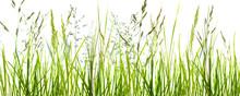 Gräser, Grashalme, Wiese Vor ...