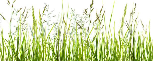 Panel Szklanygräser, grashalme, wiese vor weißem hintergrund