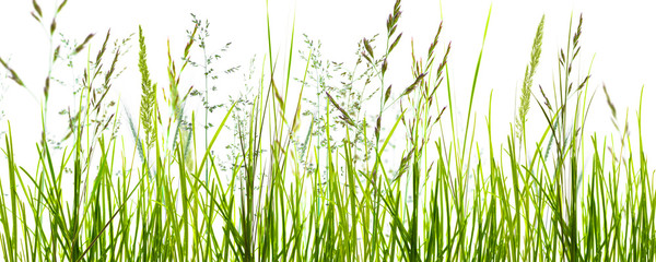 Panel Szklany Podświetlane Skandynawski gräser, grashalme, wiese vor weißem hintergrund