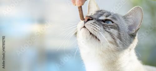 Foto op Aluminium Kat Katzen füttern.