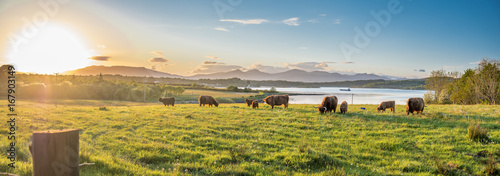 Photo Stands Cow Highland cow with a scottish loch in the background