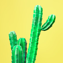 Green Cactus Set. Art Gallery Fashion Design. Minimal Stillife. Concept On Yellow Background