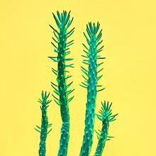 Neon Cactus Set. Minimal Fashion Stillife. Art Gallery Design. Vanilla Trendy Bright Colors. Green Cactus Mood, Surrealism On Yellow