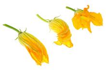 Yellow Pumpkin And Zucchini Fl...