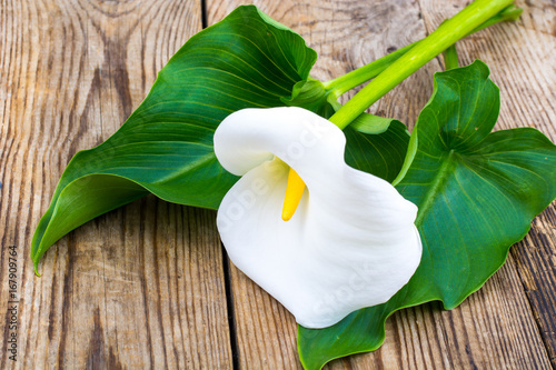 Fotografie, Obraz White flower calla with leaves on wooden table