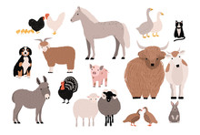 Farm Pets Colorful Collection....