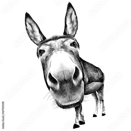 Obraz na plátně ass front view with a large head, looks black and white illustration monochrome