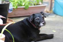 Happy Senior Mixed Breed Dog