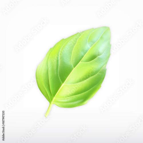 Obraz Green basil leaf - fototapety do salonu