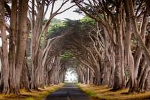 Cypress Tree Lane Near Point R...
