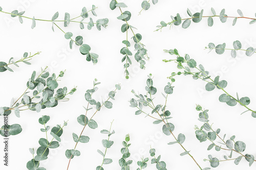 Papiers peints Fleur Pattern made of eucalyptus branches isolated on white background. Flat lay, top view