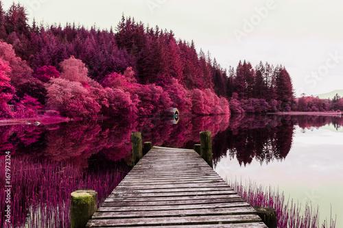 Spoed Fotobehang Lavendel Fantasy Purple Trees Loch Ard